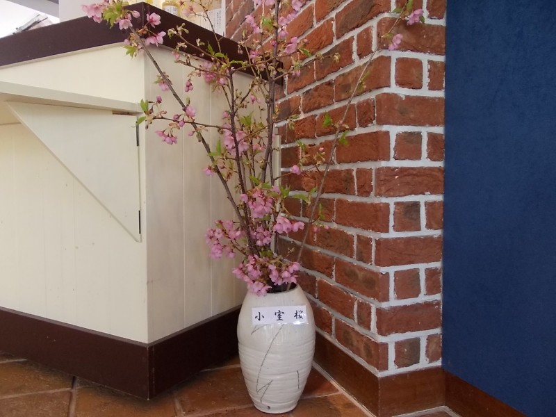 小室桜0225 002