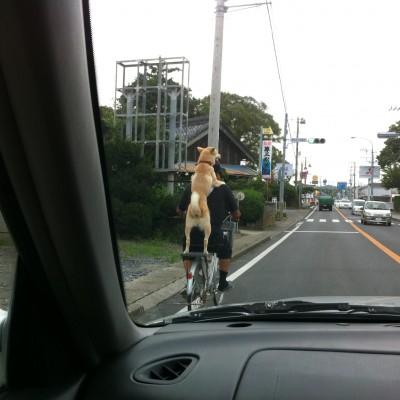 自転車に乗る犬