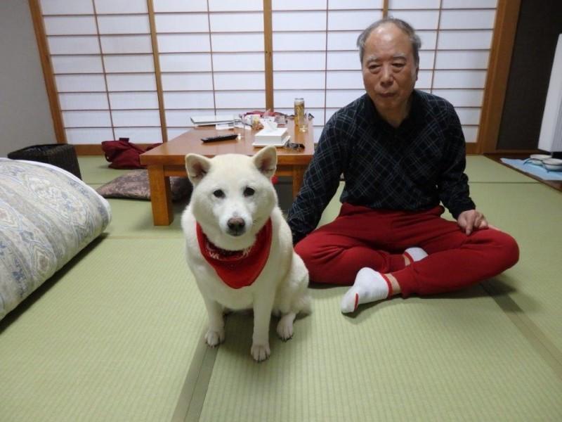 2017.4.11 近藤様 ひめちゃん(柴犬)