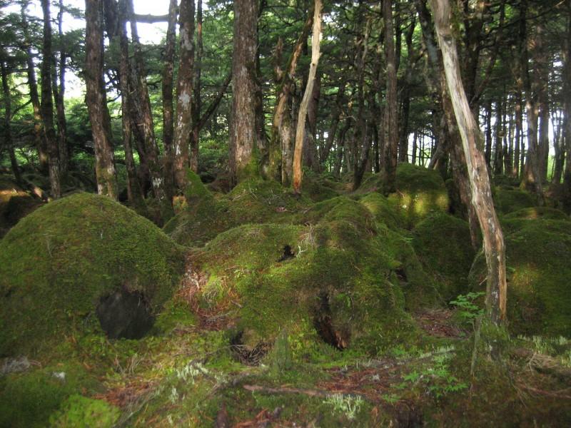 もののけの森画像③