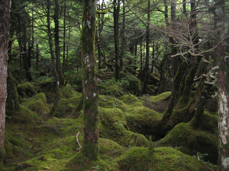 もののけの森画像④