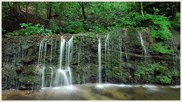 ≪画像⑥≫千条の滝1