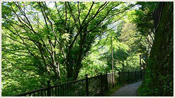 ≪画像⑨≫太閤石風呂2