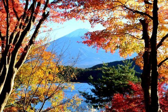 河口湖もみじ(羽田)