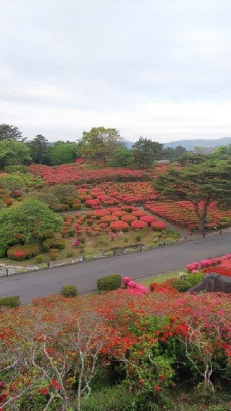 平成31年4月29日伊豆高原ブログ:小室山つつじ祭り画像2