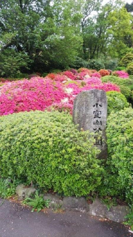 平成31年4月29日伊豆高原ブログ:小室山つつじ祭り画像4