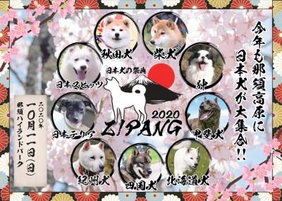 日本犬の祭典画像①