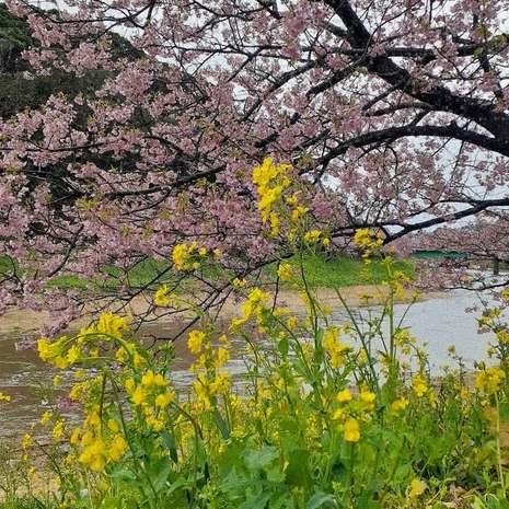 画像2 210224ブログ桜